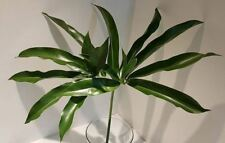Philodendron Fun Bun House Plant in a 13cm Pot x 1