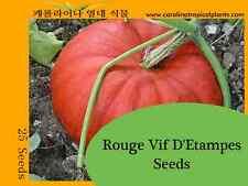 Rouge Vif D'Etampes Pumpkin Seeds (Cinderella Pumpkin) - 10 Seeds