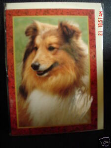 Lovely Rough Collie Blank Greeting Card