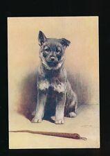Dogs The ELKHOUND #17 De Reszke Cigarettes card PPC size 127x90mm c1920/30s?