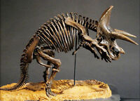 Triceratops Prorsus Dinosaur Skeleton Unpainted Statue Figure Model Resin Kit
