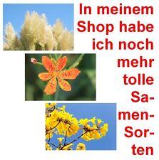Toller Samen-Spar-Set: LEOPARDEN-BLUME, Pampas-Gras und die TROMPETEN-BLUME