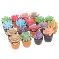 5pc 1:12 Dollhouse Miniature Mini Potted Succulent Plant Model Accessories TP