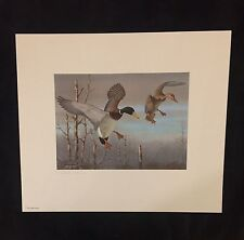 1983 OHIO STATE DUCK PRINT - Harry Antis