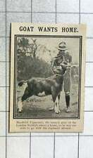 1915 Mayfield Tipperary, The Mascot Goat Of The London Scottish, Wants A Home