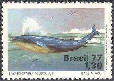 Brazil 1977 Blue Whale/Wildlife/Marine/Sea Life/Conservation/Nature 1v (n24388)