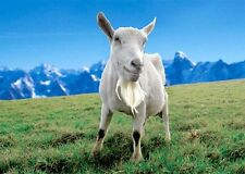 SAANEN GOAT 3D Postcard - Greeting Card