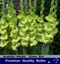 FLOWER BULBS - GLADIOLUS  - GREEN  STAR  10 Bulbs