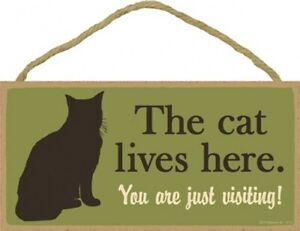 """The cat lives here. You are just visiting! Cute Gift 10"""" X 5"""" Wood Sign NEW 889"""