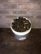 Hickory Nuts From TN No Chemicals Organically Grown Picked Up October 2020