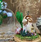 Q6a Entomology Taxidermy oddities curiosities Snail & bee honeycomb glass dome