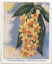 Pineapple Orchid Nepal Tibet China Dendrobium densiflorum 90+ Y/O Trade Ad Card