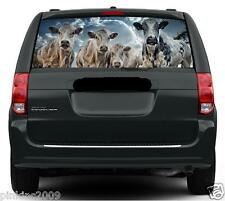 Cool Cows Car or Caravan Rear Window Vehicle Graphic Sticker / Decal