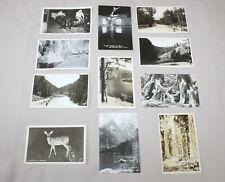 Lot 11 RPPC Real Photo Postcards 1940s Octopus Tree ID Deer CA Snow WY Lake CO