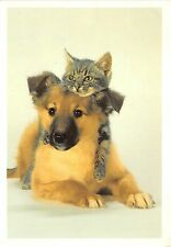 B8983 Dogs Chiens et chat Cat Italy