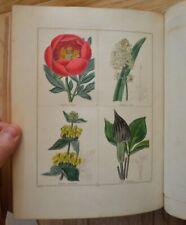 Maund's Botanic Garden Vol VI (1st 1835).  24 superb hand coloured engravings