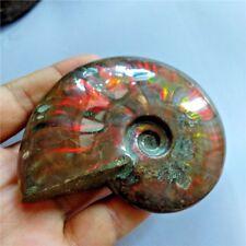 Natural Iridescent Ammonite Ammolite FACET Specimen Fossil Madagascar