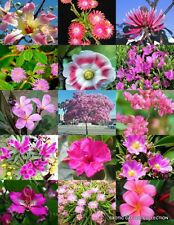 Pink Flower Plants Mix exotic garden tree fragrant bonsai bloom seed 15 seeds