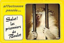 BT9205 affectueuse pensee boulot france singe monkey in prisson  animal animaux