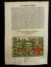 BUCH DER WEISHEIT FABEL INKUNABEL HOLZSCHNITT GRÜNINGER 1501 HIRSCH WOODCUT J52