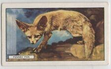 Fennic Fox c80 Y/O Trade Ad Card