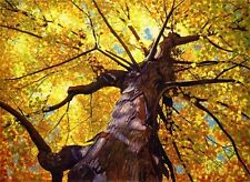 HD Art Print Autumn Golden Tree Oil painting Printed on Canvas 12X16 Inch P064