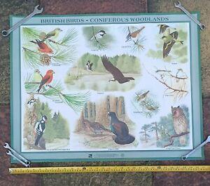 Vintage RSPB British Birds Poster Set - 5 Large prints - good cond 78 x 61 cm