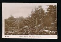 Hants Hampshire ROYDON Woods near Brockenhurst pony&trap pre1919 RP PPC Kingsway