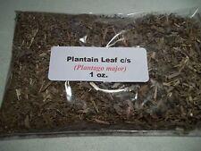 1 oz. Plantain Leaf c/s (Plantago major)