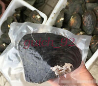 1pcs Wrapped Oysters with Large Pearl Birthday Gift weight 300-500g