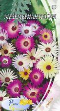 graines de Mesembryanthemum - Ficoïde -  Tapis magique