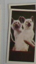 #37 - siamese kittens card
