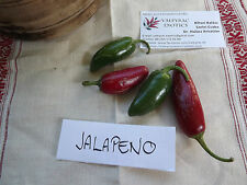 Chili Jalapeno 50+ Samen - Saatgut - Gemüsesamen - PIKANT und FEIN!