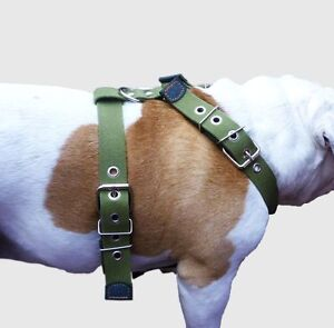 "Cotton Web Dog Harness Large. Fits Girth 29""-34.5"". 1.5"" Wide Straps, Rottweiler"
