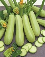 Seeds Zucchini Courgette Squash Bush Type 36 Days Vegetable Organic Heirloom