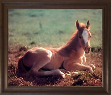 Horse Colt Wildlife Animal Wall Decor Brown Framed Picture Art Print (19x23)