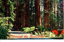 Vintage Postcard California Through the Giant Redwoods North California 1961 pm