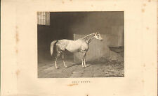 """1840s engraving  of a race horse called """" gret momus""""  by a.cooper"""