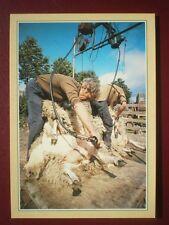 POSTCARD E1-5 SHEEP SHEARING TRADITIONAL CRAFTS