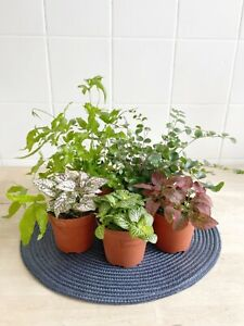 Mix of 5 terrarium plants