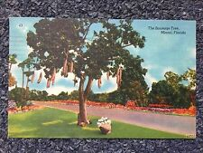 1950 The Sausage Tree, Miami, Flordia Postcard