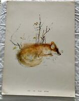 BEAUTIFUL VINTAGE WILDLIFE ANIMAL MAMMAL ART PRINT FROM DENMARK BY MADS STAGE