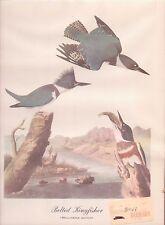 "Kingfisher Bird Print - Audubon Repro 1940's 11.75"" x 9"" FREE SHIP USA (bird3)"