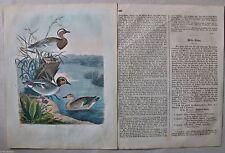 Originaldrucke (1800-1899) aus Europa mit Zoologie und Lithographie