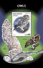 Maldives 2018  fauna owls  S201901