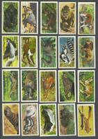 1962 Brooke Bond African Wild Life Trading Cards Complete Set of 50