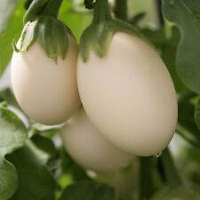 Vegetable Seeds - Aubergine - Ivory - 5 Seeds