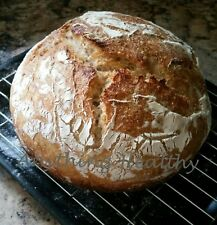 Dried 100% Whole Wheat Sourdough Bread Starter Priobiotic Yeast