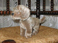 Steiff Vintage Mohair Standing Raudi Dachshund Dog 1317,07