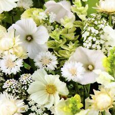 Blumen Mischung blühender Blumenteppich Weiß white 200 Samen Nr.301